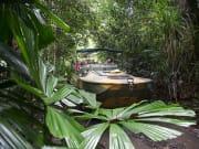 rainforestation army duck on land