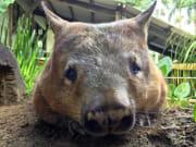 wombat koala and wildlife park