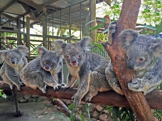 Rainforestation Koala & Wildlife Park cute koalas