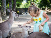 child hand-feeding kangaroos at wildlife habitat