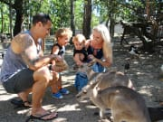 family feeding kangaroos wildlife habitat
