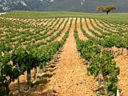 arrabida vineyard