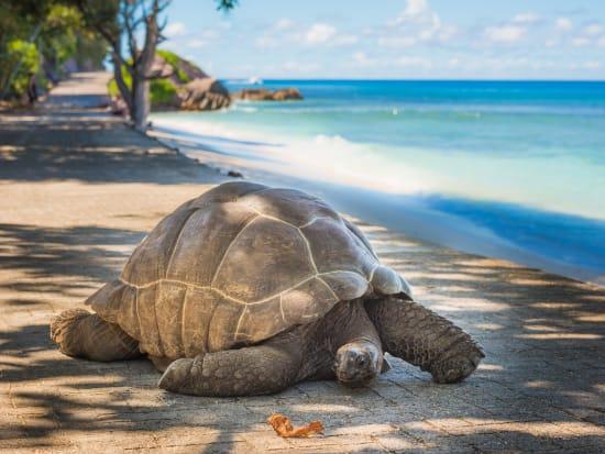 マヘ島 (マヘ島発ツアー) | セーシェルの観光・オプショナルツアー専門 ...