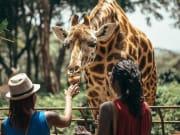 Africa_Kenya_Nairobi_Giraffe_shutterstock_411478390
