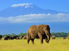 Africa_Kenya_Amboseli_shutterstock_1110105137