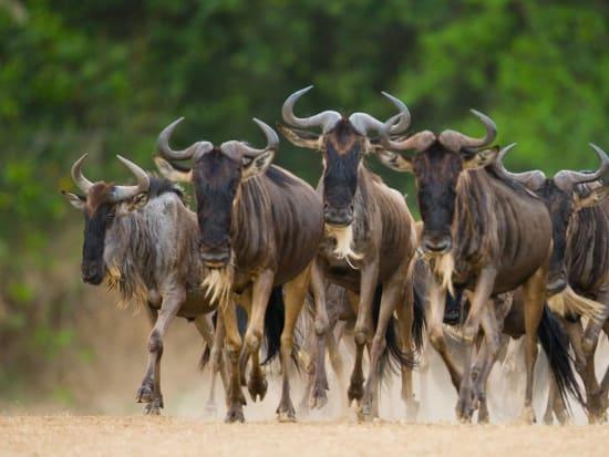 Africa_Kenya_Masaimara_shutterstock_399818356