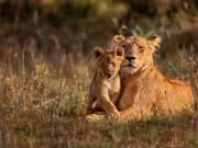 Africa_Kenya_Masaimara_shutterstock_238384645