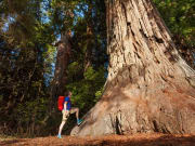 USA_San Francisco_Yosemite Tour_Redwood