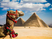 Egypt_camel_shutterstock_137979971