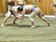 sumo wrestling morning practice viewing in Tokyo
