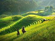 Travelbay_Vietnam_Tours_-_Rice_Fields_Sapa-crop