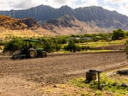 Mao Farms_Oahu web-3