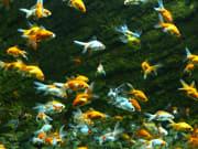 fish-3639058_1920