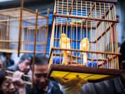 xian market tour birds in a cage