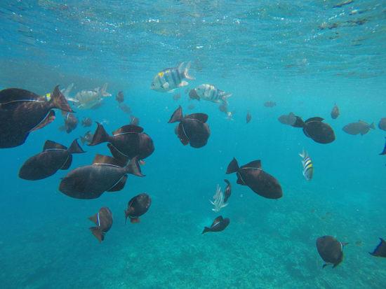 Hawaii_Maui_Kolea Charter_Reef Dancer Glass Bottom