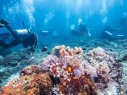 Cairns Great Barrier Reef Scuba
