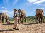 Elephant_bush_walk_02