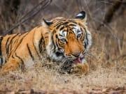 India_Ranthambore National Park_shutterstock_539