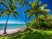 coconut trees near the ocean port douglas