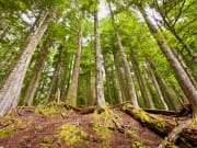 Seattle_Evergreen Escapes_Woods