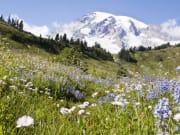 Seattle_Evergreen Escapes_Flower Field Mt Rainier