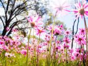 pink wildflowers western australia