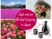 Shibazakura Spring AC Collage _with Text