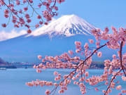 Mount_Fuji_Cherry_Blossoms_shutterstock_446237629