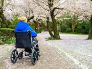 Japan_Wheelchair_Cherry_Blossom_shutterstock_550212085