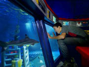 USA_California_Starline Tours_legoland-california-deep-sea-adventure