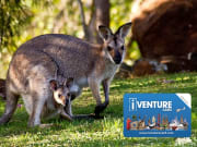 iVenture Flexi Pass Zoo and Wildlife