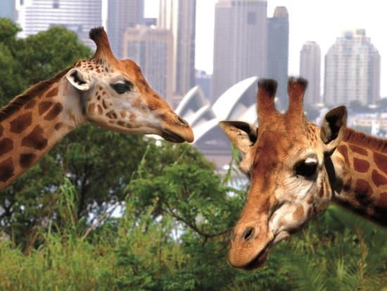 Taronga Zoo Australia