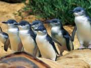 Phillip Island Day Tour