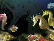 Seahorse World Tasmania Australia