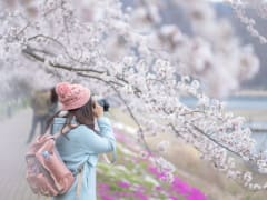 Japan_Generic_Cherry_Blossom_girl_Cmaera_shutterstock_638627449