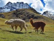 Peru_RainbowMountain_shutterstock_1073690807