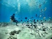 Scuba Diving 01
