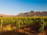 Stellenbosch_Vineyard in the hills