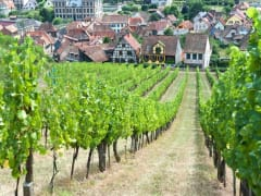Wine Tour from Strasbourg