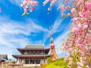 Japan_Tokyo_Zojoji_Cherry_Blossoms_shutterstock_624346874