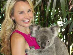 Meet cuddly koalas at the Wildlife Habitat
