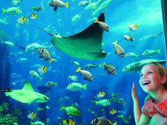 marine_and_waterpark_the_lost_chambers_aquarium_ambassador_lagoon_28_10_2013_8907