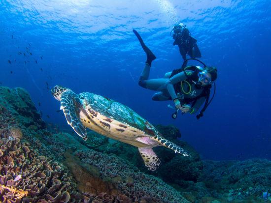 Indonesia_Bali_Nusa Penida_Scuba Diving_shutterstock_454381399