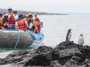 Gala-Marine iguana4