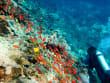 Indonesia_Bali_Underwater_shutterstock_89257957