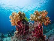 Indonesia_Bali_Mejangan_Coral_shutterstock_195121844