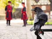 UK London Royal Palaces Yeoman Warder