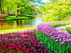 Netherlands, Keukenhof Garden, Tulips