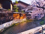 Japan_Kyoto_Gion_Shirakawa_Cherry_Blossoms_shutterstock_1251632470