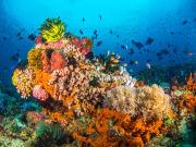 vibrant coral reef underwater in anilao batangas